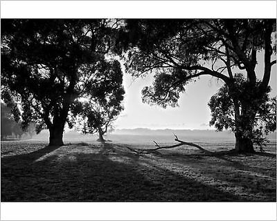 25x20cm Photo-Black and White Trees-12230586-8105