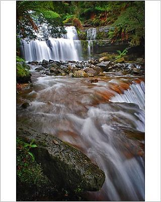 25x20cm Photo-A view of Liffey Falls in Central Tasmania.-12477679-8105