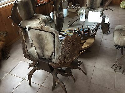 Antique Moose Antler Table and Wolf Pelt Chairs