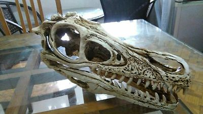 1/1 Xun Menglong Velociraptor dinosaur Resin Fossil skull Model Collectibles