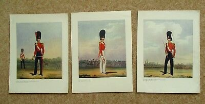 British Army Officers Antique Colour Illustration 1909