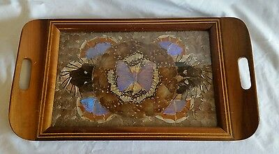 Butterfly Wing Art, Inlaid Wood Tray Blue and earth tone colors