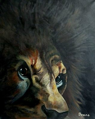 Original oil painting on stretched canvas 'Lion' by Beano. Animals, Lion.