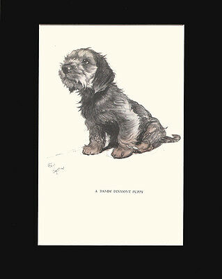Gorgeous Dandie Dinmont Terrier Puppy Dog by Cecil Aldin 1930 Print 9x12 Mat