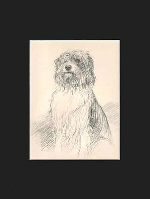 Vintage Old Bearded Collie Dog 1938 by K.F. Barker Matted 9X12 Matted Print