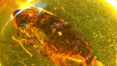 100% Natural Untreated Myanmar Amber Insect Fossil Inclusion Specimen Burmite 7