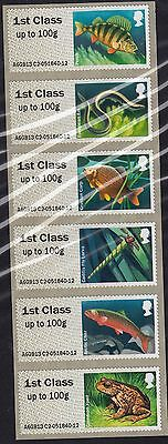 Great Britain 2013 Mint Fish Freshwater Life 2 - Rivers Stamp Set - Self-adhesiv