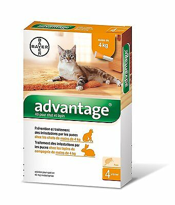 ADVANTAGE 40 bte de 4 pipettes chat/cat et furet/ferret moins de 4 kg