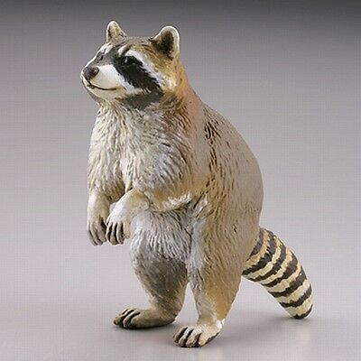 Kaiyodo Capsule Q Museum Miniature Figure Common Raccoon Japan