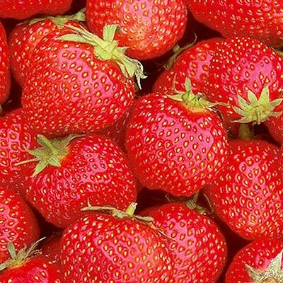 5 /10 / 20 OR 35  x STRAWBERRY PLANTS BARE ROOTED CHOICE OF VARIETIES pre order