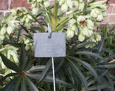 6 shabby old Welsh slate rectangular plant labels seed markers with pot hooks #4