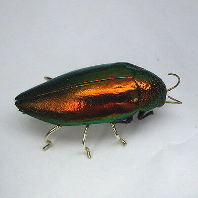 .Natural Beetle Wing Green Red Brass Pin Brooch R1