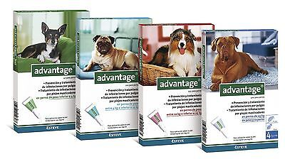 ADVANTAGE  4 pipettes antiparasitaire/Anti Puces  chiens tailles diverses