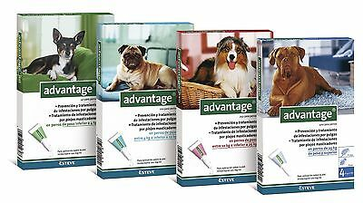 ADVANTAGE  4 pipettes antiparasitaire/Anti Puces/fleat chiens/dogs  1 à 40 kg
