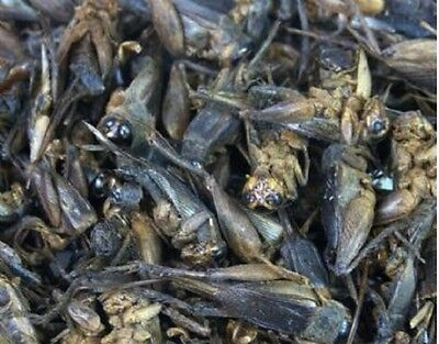 Dried crickets - for sugar gliders, insect eaters, fish. birds and more