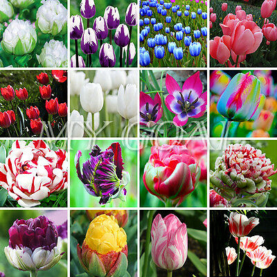 200Pcs Rainbow Tulip Seeds Rare Flower Seeds Home Garden Decor Various Plant HOT