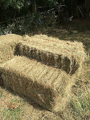 large hay bale 20kg bedding horse rabbits delivered guinea pig  back for2 016