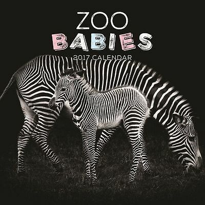 Zoo Babies 2017 Wall Calendar NEW by Paper Pocket