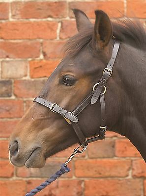 Hy Leather Foal Head Collar for Horse & Pony Brown/ Black 1479P