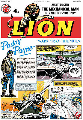Lion , Paddy Payne Recreated Digital Line Work and Coloured Version