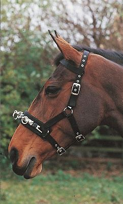 Hy Lunge Cavesson with Metal Nose Fittings and Padded Base 4345P