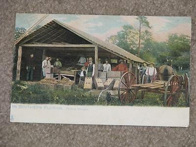 Packing Oranges in Southern, Florida 1908, used vintage card