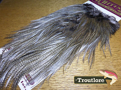 Whiting Farms Coq De Leon Rooster Saddle Medium Pardo New Flytying Feathers