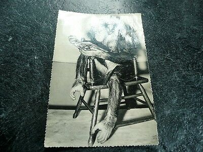 Chimpanzee Postcard London Zoo Date Stamp 1958 Vintage  Collectable