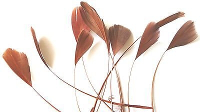 """10 Chocolate Brown Co Feathers Approx 5"""" For Hat/fascinator Finishing/craft Etc"""
