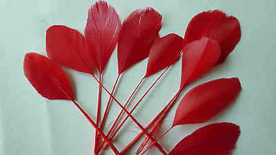 """10, RED COLOURED  CO FEATHERS APPR 5"""" FOR HAT/FASCINATOR FINISHING/CRAFT etc;"""