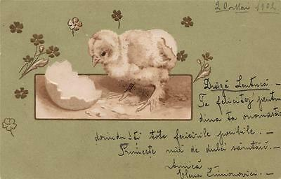 Greeting - Easter Chick (Romanian Card)