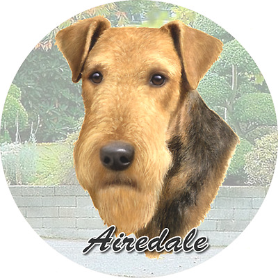 Airedale 2Ct Car Coasters