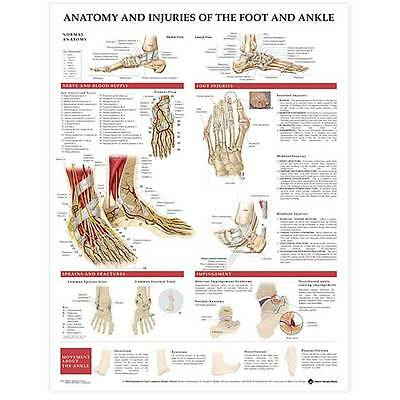 Anatomical Chart Anatomy & Injuries of the Foot and Ankle (Fractures & Sprains)