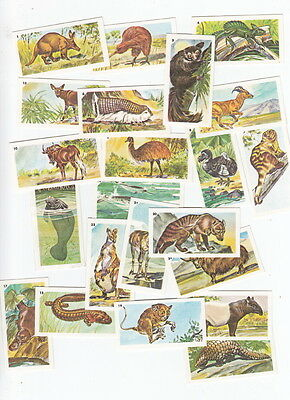 Set of Nabisco Exotic Animals Cards 22/24