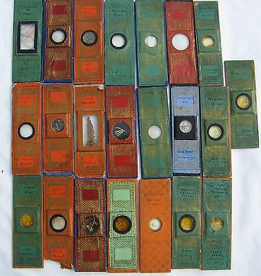 Good Boxed Collection Victorian Microscope Slides, Parrot feathers, human hair,
