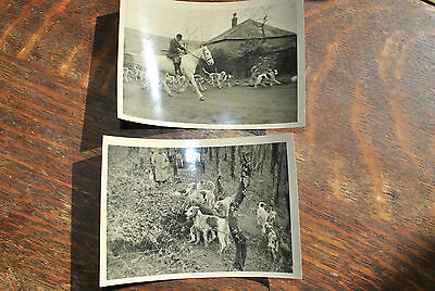 THE DULVERTON WEST FOXHOUNDS 1950s TWO PHOTOGRAPHS