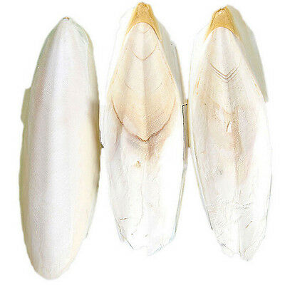 1 bag Cuttlebone Cuttlefish Bone Cuttle Fish For Reptiles Bird Pet Food Calcium