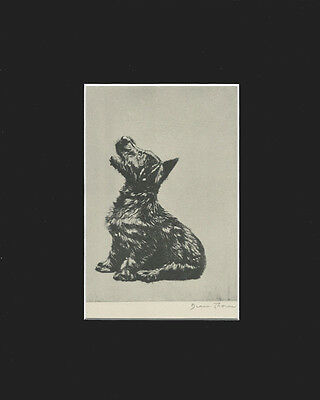 Cute ScottishTerrier Dog Puppy  Print 1932 by Diana Thorne 9 X 12 Matted