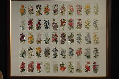 Old English Garden Flowers, 2Nd Series - Repro Set From 1913 In Lovely Frame