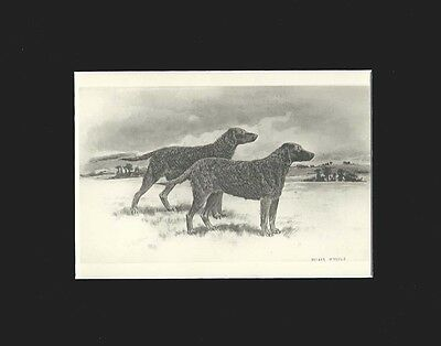 Antique Flat or Wavy Retriever Dogs  Print  by Arthur Wardle 1897 Matted 8X10