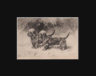 Antique Dandie Dinmolnt Terrier Dogs Print  by Arthur Wardle 1897 8X10 Matted