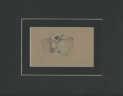 """Vintage Bull Terrier Dog Print Sketch by  Cecil Aldin 8X10"""" Matted 1934"""