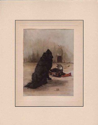 Chow-Chow Dog RARE ANTIQUE Print 1911 by Maud Earl 11x14 Matted