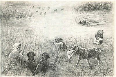 Chesapeake Bay Dogs by Marguerite Kirmse 1920's 8 LARGE New Blank Note Cards