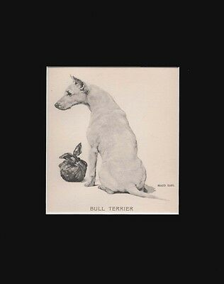 Antique Bull Terrier Print by Maud Earl 1912 8x10 Matted