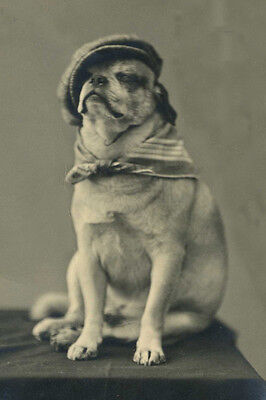 Early 1900's Pug Dog in Golfer's Cap Antique Photo - LARGE New Blank Note Cards