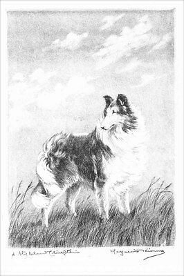 Collie Dog A HIGHLAND CHIEFT 1923 Marguerite Kirmse ~ LARGE New Blank Note Cards