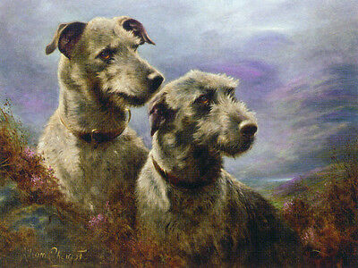 Scottish Deerhound Dog Portraits  by Lilian Cheviot~ LARGE New Blank Note Cards