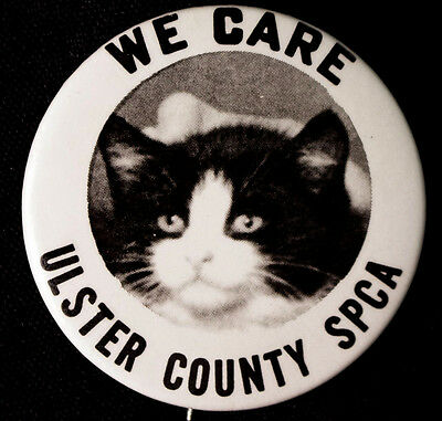 Cute Cat Button - We Care - Ny Spca -  1980's - Pinback Scarce