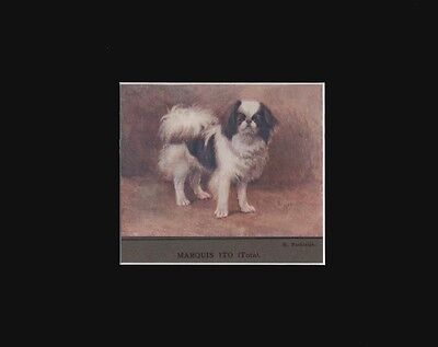 Antique Print Dated 1909 Japanese Chin Dog by K. Rashleigh 8x10 Matted